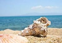 8月海螺肥,看看可吃可藏海螺裡的小祕密