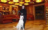 一隻杜賓犬與一隻杜高犬被女主人訓練的服服帖帖!