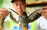 鄭州男子撿1只鳥,嘴帶鉤重130克還啄人,專家:幸虧沒賣沒放生