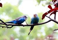 二胡鳥叫、馬嘶鳴是泛音嗎?如何演奏?