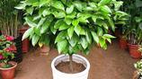 擺放在家中讓你富貴的發財樹,跑斷腿都找不到這麼全的綠植盆栽