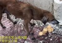 流浪狗媽媽無心吃食,看到這些小奶狗時,女孩明白了它的一番苦心