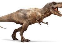 霸王龍是最強的肉食恐龍嗎?