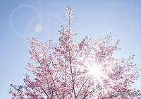 春天拍花,簡約好看有層次,這3條攝影技巧,你會用嗎?