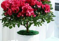 家庭養花,大部分花卉都喜歡這樣的配土,透水透氣,不板結