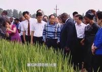 袁隆平在馬達加斯加成功種植水稻