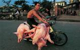 越南人的摩托車,載牛載豬堪比汽車,讓你大跌眼鏡