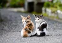 幼貓亂叫、亂尿、拉稀怎麼辦?小奶貓養育指南