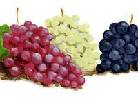 葡萄及葡萄製品含有大量白藜蘆醇