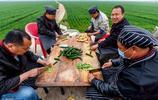 農村麥田旁做出200桌傳統喜宴,這才是河南農村宴席的姿勢!