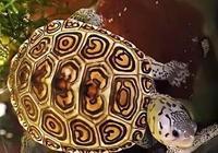 龜龜的日常飼養與疾病治療!