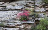 《風景圖集》陝西:徜徉秦嶺秋色—宛若油畫中的風景