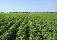 如何在中國打造一個現代化的家庭農場——來自荷蘭家庭農場的樣本