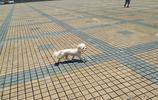 實拍東莞大朗廣場:烈日下,多少路人,僅是匆匆而過