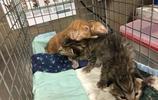 好心人救回4只小貓,本以為是被拋棄的,貓媽媽:誰偷我孩子了!