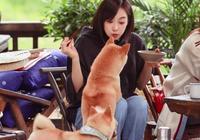 《嚮往的生活》小狗崽隨地撒尿,何炅處理方式讓宋茜捂臉,好隨意