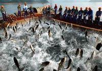 漁業保險真的可行嗎?