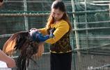 廢棄羽毛製成扇一把可賣1680元,湖北女子養珍禽,帶動村民一起富