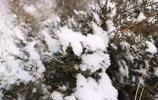 飛雪迎春,北京終於有點冬天的樣子,去香山賞雪攀登香爐峰
