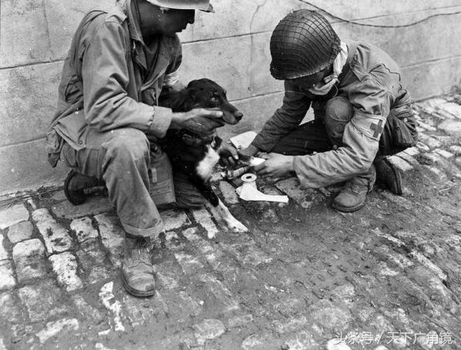 二戰中十分有愛的一組照片 最後三張讓你對德軍刮目相看