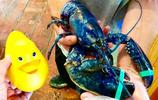 漁夫出海捕魚意外捕獲藍色物體,仔細查看瞬間讓他樂壞了