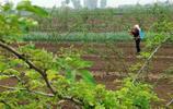 陝西農村68歲老人冒雨打農藥,說起上門女婿就激動,看看啥情況