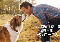 票房過億!  黃磊何炅組隊打call《一條狗的使命2》送上今年最強治癒劑