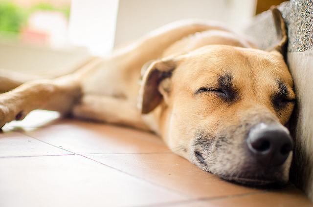 每天讓狗狗在家待20個鐘,主人該如何調節環境,讓室內變得更舒適