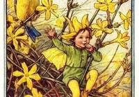 你以為的迎春花,未必是真的迎春花丨漲姿勢