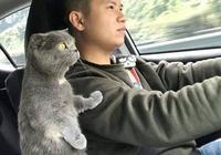 主人正在開車,貓咪突然伸爪搭肩!有誰注意到後座那隻貓的表情?
