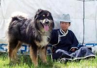 中國39種土狗