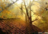 除了古觀音禪寺,陝西還有7處免費的千年古銀杏!美到耀眼!