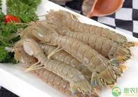 皮皮蝦多少錢一斤?養皮皮蝦賺錢嗎?2019年皮皮蝦市場行情分析