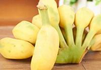 芭蕉是香蕉嗎 寶寶可吃芭蕉嗎