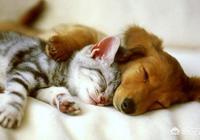 為什麼人類要把貓和狗當作寵物來養?