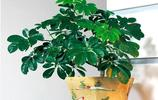 盆栽不要亂搬回家,這幾款綠植號稱天然空氣淨化器,更適合新家