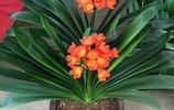 好看又好養的盆栽,美觀又清新空氣,這些絕對家裡養花的不二之選