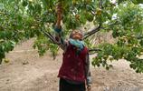 山西農村9旬老人養大4個子女,現住花椒地裡,看他生活成啥樣