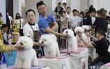 寵物美容師大賽 狗狗被精心打扮的萌態十足