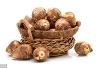 芋頭田間管理注意哪些事項?芋頭啥時間種植好?芋頭種植技術