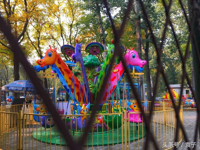 """今年我在日壇公園找到老舍筆下的天堂,""""北平的秋""""的樣子"""
