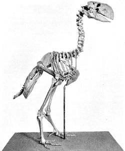 神鵰俠侶的雕是什麼物種?