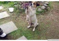 流浪狗媽媽向路人哀求,看到一窩小奶狗後,原主人你良心過得去嗎