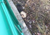 在野外撿到兩隻流浪狗,小傢伙們差點被凍死,幸虧遇到好心男孩