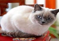 都說尾巴能看出貓想法,這3種你知道嗎?