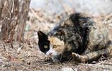 賀蘭山森林公園的那些慵懶的貓咪