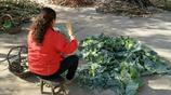 實拍農村大姐做冬儲酸菜,過程很複雜 酸菜很好吃