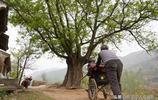 他陪伴妻子坐在古樹下8年不出村,看陝西農民大叔生活成啥樣