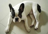 性格不同適合養的寵物狗也不同,你知道你適合養哪種狗嗎?