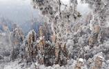 張家界現霧凇、冰掛、雲海奇觀,像極了仙境!